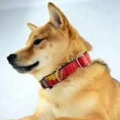 Kantha Dog Collar