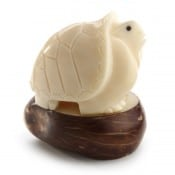 Tortoise (B)