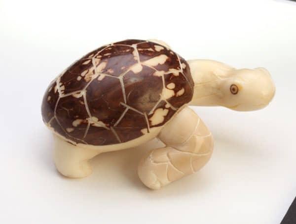 Tortoise (D)