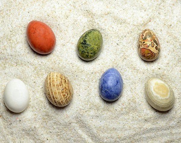 Egg Starter Set (7 Egg Variety)