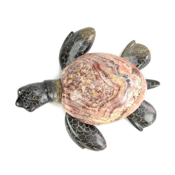 Display Turtle - XS