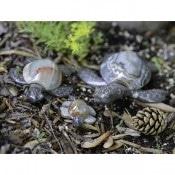 Marble/Onyx Turtles 14cm