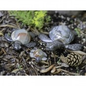 Marble/Onyx Turtles 12cm